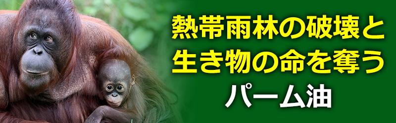 熱帯雨林の環境と生き物の命を奪うパーム油