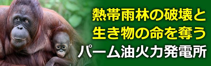 雨林の破壊と熱帯雨林の生き物の命を奪う舞鶴のパーム油火力発電所